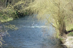 Heron on River Avon, from Stare Bridge : Spring-2000 : photo Duncan Bean