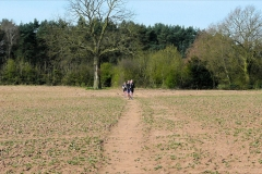 ACW Challenge : 5-Apr-2009 :  Kenilworth Golf Course to A46 stretch of ACW (When we installed the k/g just before this field, the path was a rough ploughed field, with the reinstated path DEEP water-filled ruts where the heavy tractor