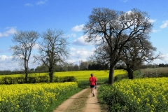 09:33 : Jogging through the fields of gold on the approach to Ryton. Photo - Chris Boden